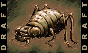 Beetle_draft