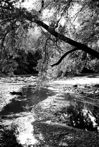 Cgross_nature2