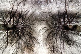 Tree eyes