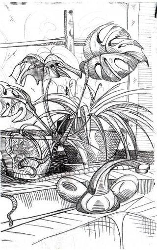 Cbennis_plant